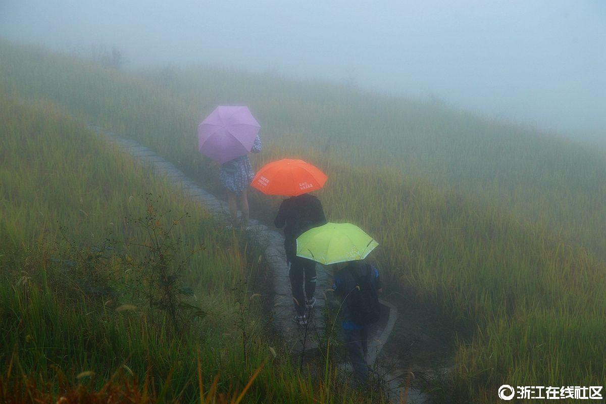 云和雾里看梯田