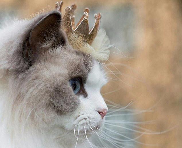 壁纸 动物 猫 猫咪 小猫 桌面 634_514