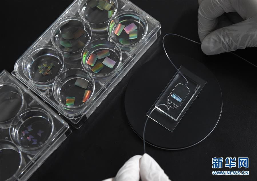 """中国科学家开发出""""可视化""""的""""心脏芯片"""""""