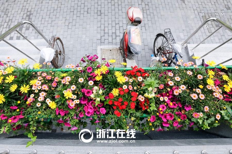 花下停车 杭州最浪漫的停车位