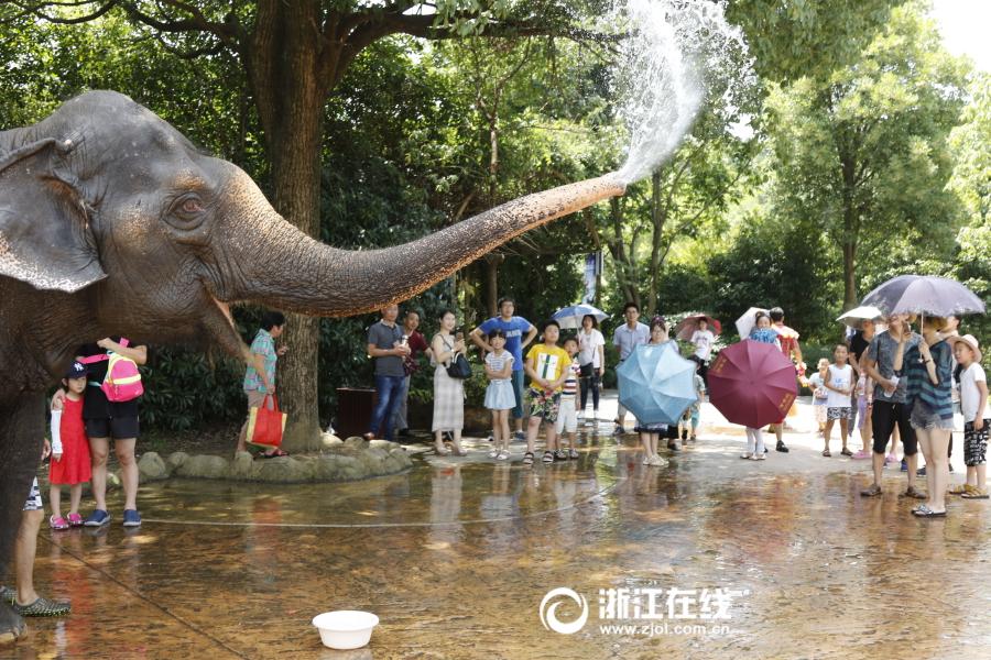 """杭州野生动物世界:动物享受清凉""""福利"""""""