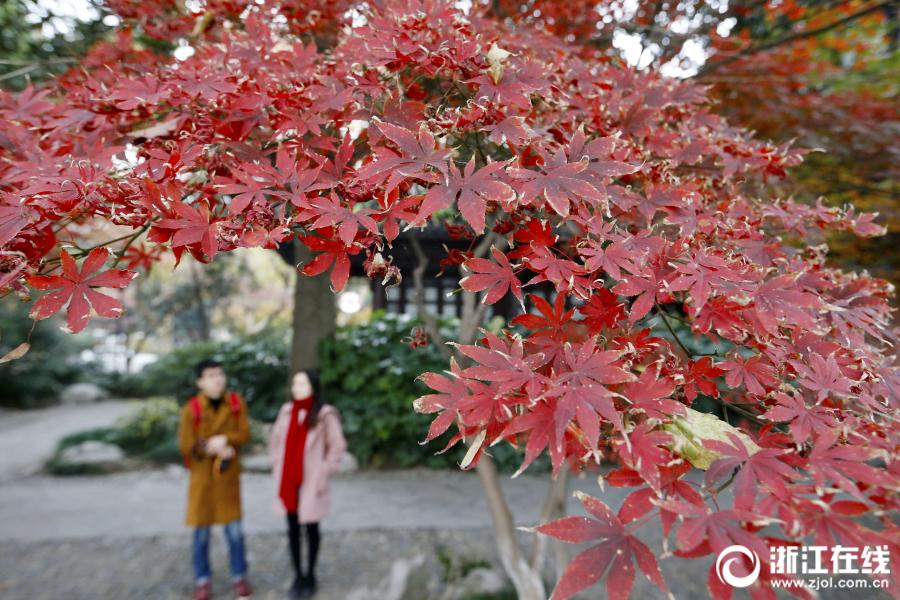 """美爆了!杭州""""大雪""""无雪 西湖上演片片红叶情"""